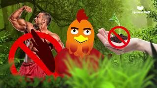 Mitt liv som kyckling: Nu agerar vi