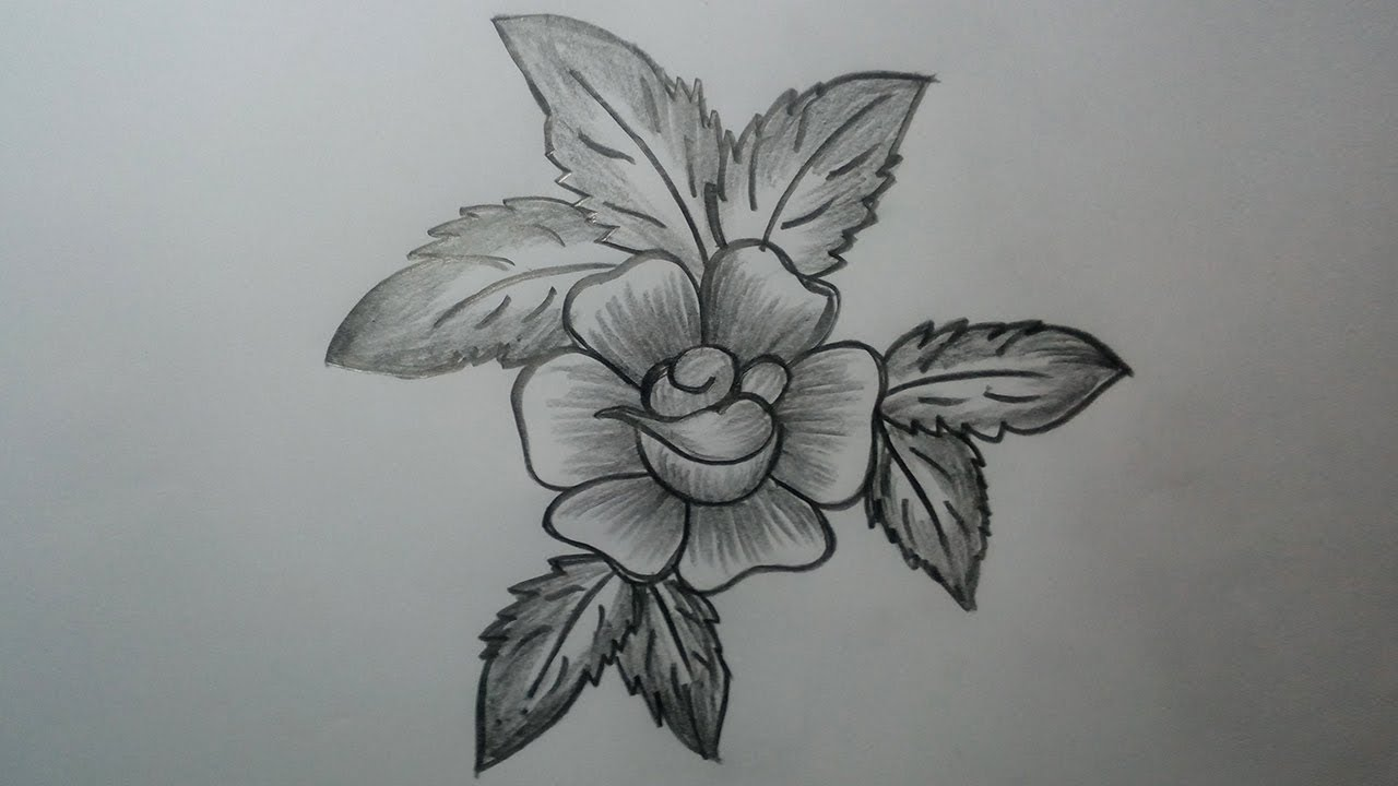 How to Draw a rose || Pencil Drawing and Shading for ...