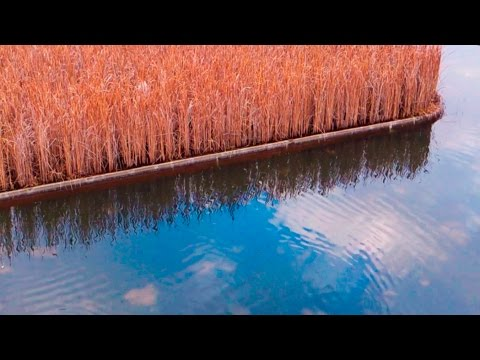 Natural Filters - Best Filtration Systems for ponds and natural pools ᴴᴰ