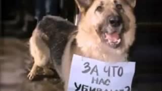 Грустное видео о животных((((Я чуть не плачу((((Кто не поставит