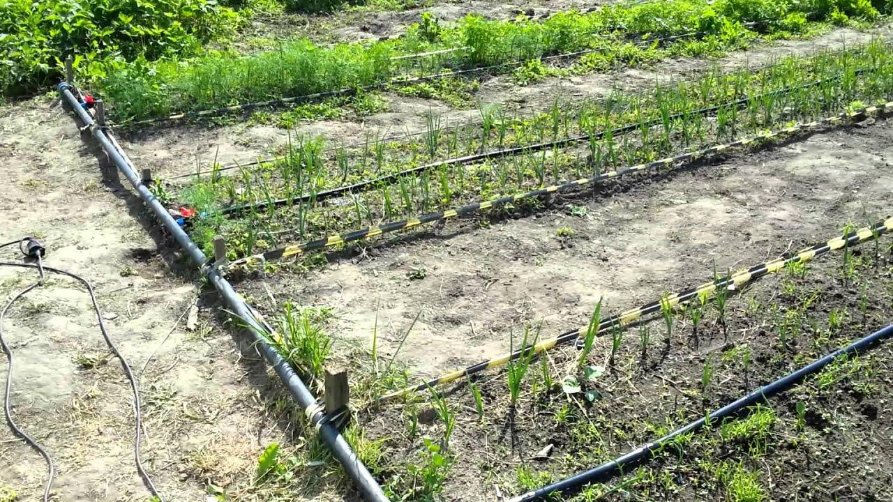 капельный полив огорода своими руками