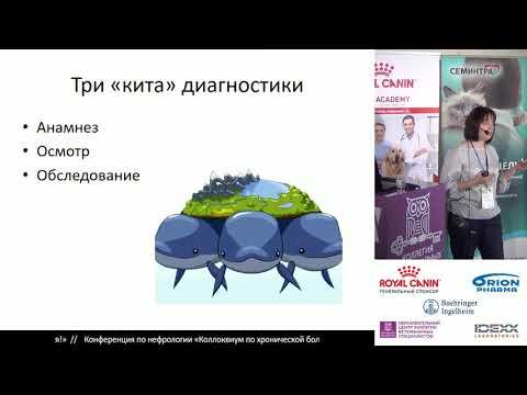 Редькина Н. Н. - ХБП кошек. Симптомы и обследование