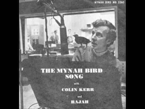 Colin Kerr & Rajah - The Mynah Bird Song - YouTube - photo#9