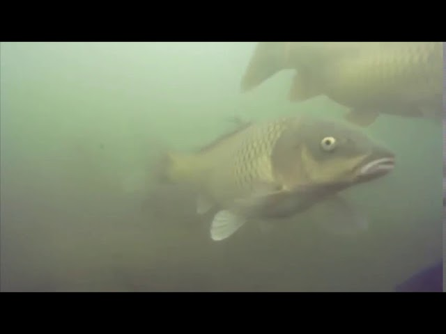 Video 24M Fish Farm Census by ROV