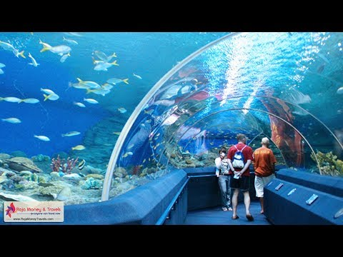 Aquarium Pattaya Underwater World Thailand Tour  - Raja Money Travels