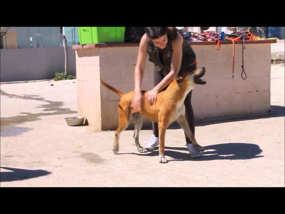 Protectora de animales de m laga b rbara youtube for Protectora de animales malaga ciudad jardin
