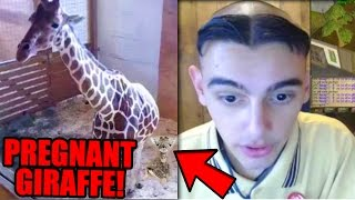 Top 5 LIVESTREAMERS YOU WONT BELIEVE EXIST! (Animal Adventure Park Giraffe Cam & More)