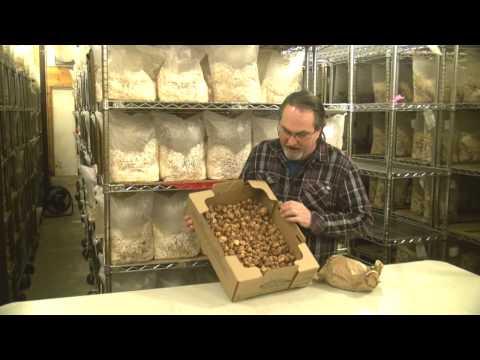 Oregon Truffles & Other Regional Varieties