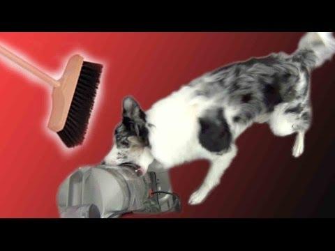 Teach Calmness Around Vaccum Cleaner or Broom - Dog Training