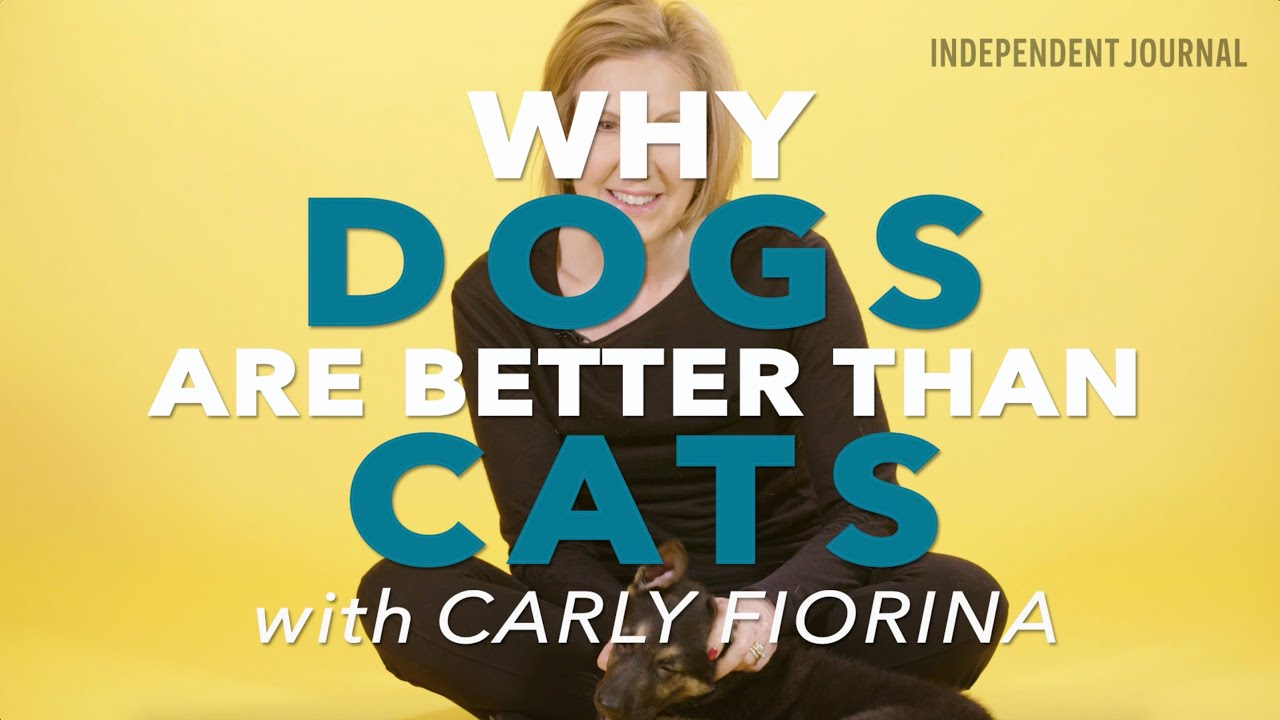 why dogs are better pets than cats persuasive essay 91 121 113 106 why dogs are better pets than cats persuasive essay