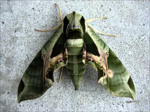 Amazing Moths!