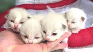 凄い!!かわいい子猫ちゃん💕お目目もパッチリ開いたニャ~!❤
