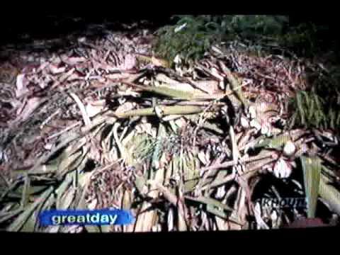 Composting Gfg Master Gardeners Wmv Youtube