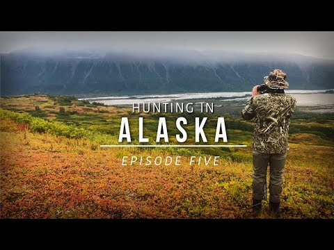 Hunting Giant Bull Moose and Grizzly Bear in Alaska