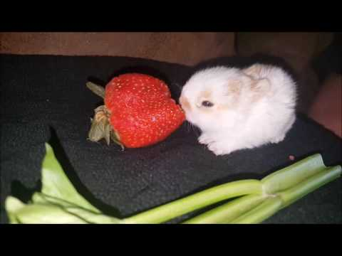 Cute Rabbits Eating Compilation