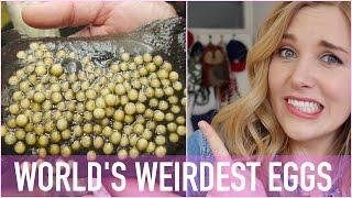 WORLD'S WEIRDEST EGGS?! | Maddie Moate