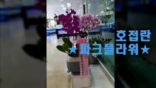 광주꽃집# 파크플라워#치평동 꽃바구니#치평동 꽃다발#치…