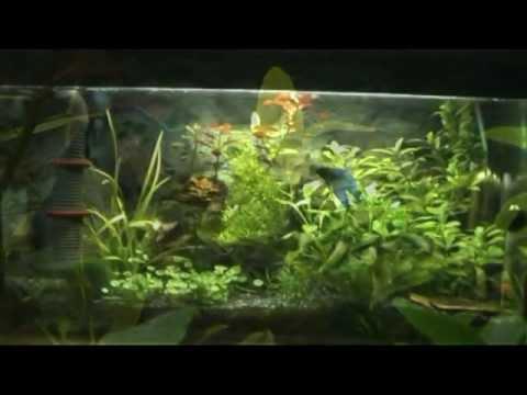 Mein 60l kampffisch aquarium youtube for Kampffisch aquarium