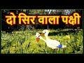दो सिर वाला पक्षी | Hindi Cartoon For Kids | Panchatantra Moral Stories For Childrens | Chiku TV