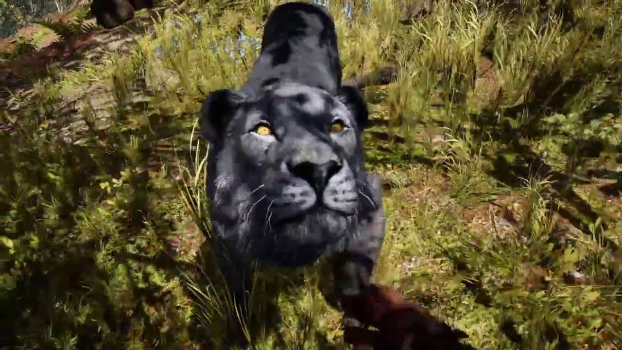 Far cry primal rare black lion location youtube gumiabroncs Gallery