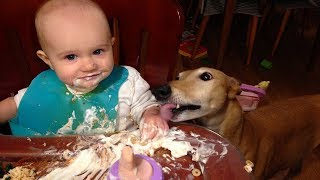 Funniest Moments Baby Sharing Food For Dog | Dog loves Baby