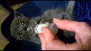 попытка накормить кота найдёныша