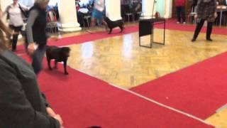 23.01.2016- Тула. Выставка собак.