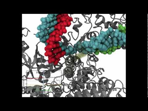 Millisecond dynamics of RNA polymerase II translocation at atomic resolution