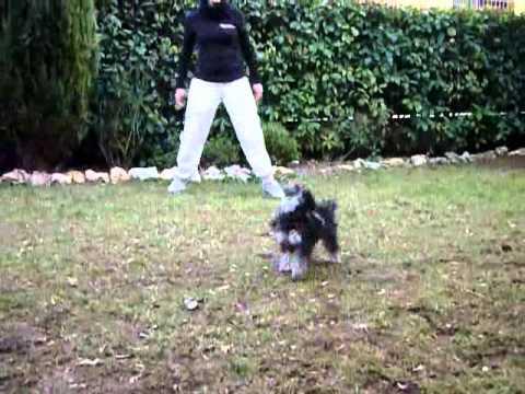 DOG DANCE TRAINING con Virginia Dallara e Leyla Tres Jolie