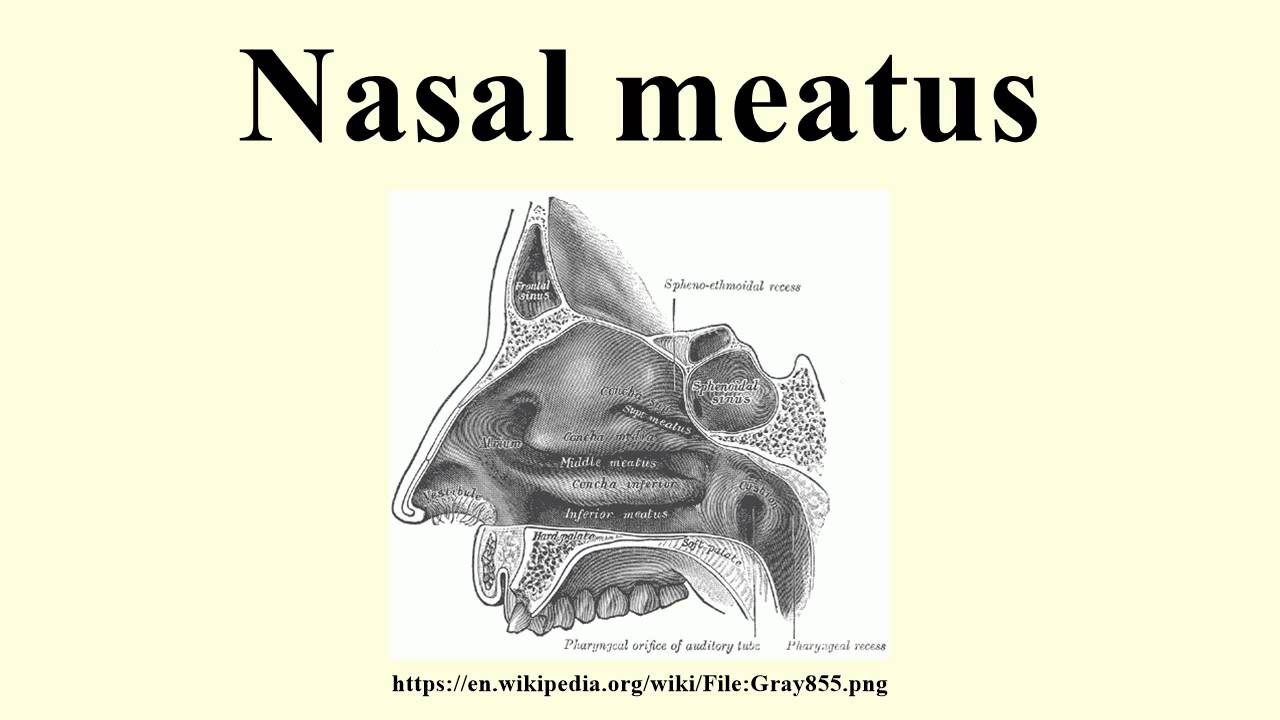 Nasal meatus - YouTube