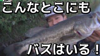 バス釣り 狭い水路で40UP&コトカスミディアム&おまけ! thumbnail