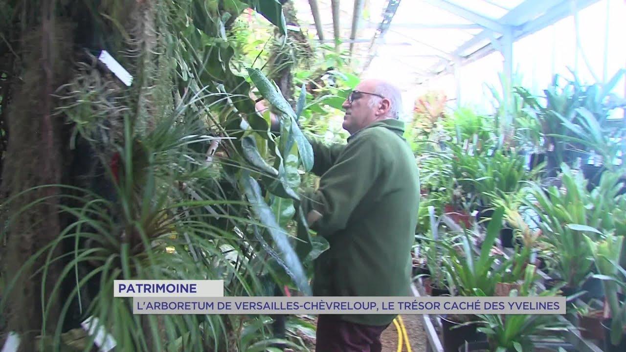 Yvelines | Patrimoine : L'arboretum de Versailles-Chèvreloup, le trésor caché des Yvelines