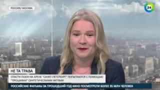 АКЦЕНТЫ  Не та трава  чем не угодил газон «Зенит Арены»