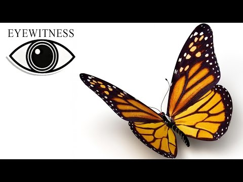 EYEWITNESS | Butterfly & Moth | S2E3