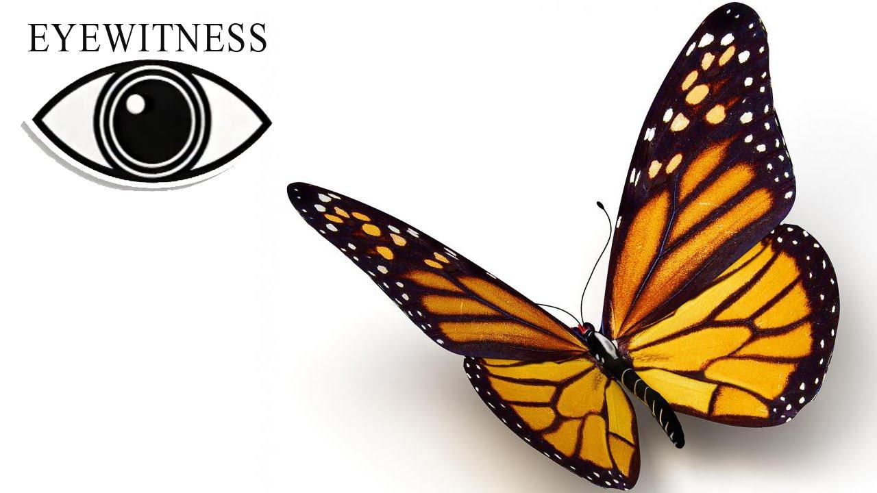 EYEWITNESS | Butterfly & Moth | S2E3 - YouTube