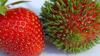 Что происходит, когда фрукты и овощи начинают прорастать раньше времени