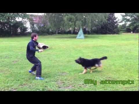 schutzhund-/-ipo-protection-dog-training-with-lehr-helfer-dirk-wernet