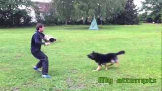 Schutzhund / Ipo Protection Dog Training With Lehr-helfer Dirk Wernet