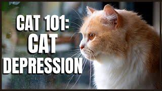 Cat 101: Cat Depression