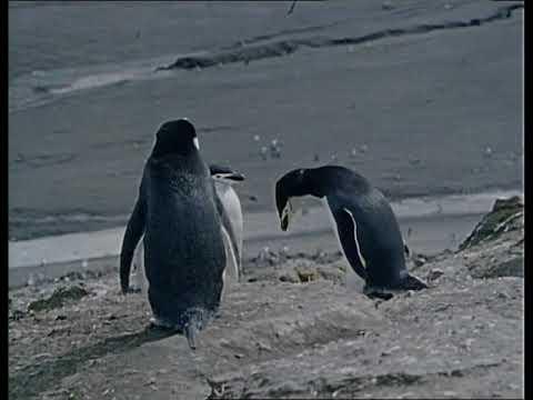 Antarctic. Part II. The Flight of Penguins, Episode 27 of 37, Jacques Cousteau Odyssey, Life Aquatic