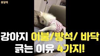 [강아지 브이로그] 강아지 이불/ 방석/ 바닥 긁는 이…