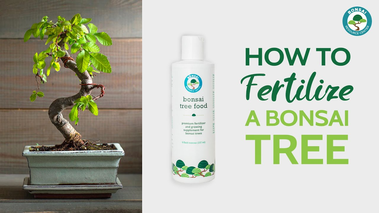 How To Use Bonsai Tree Food Houseplant Resource Center