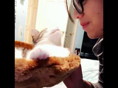 Pets for all  white kitten grabs womans face licks her