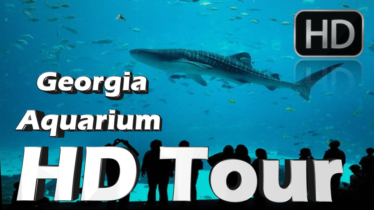 Georgia Aquarium Hd Tour Youtube