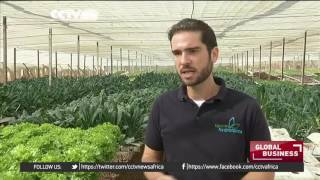 Hydroponic farming gaining traction in Cairo