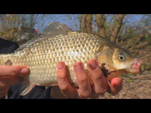 Рыбалка Ловля карася