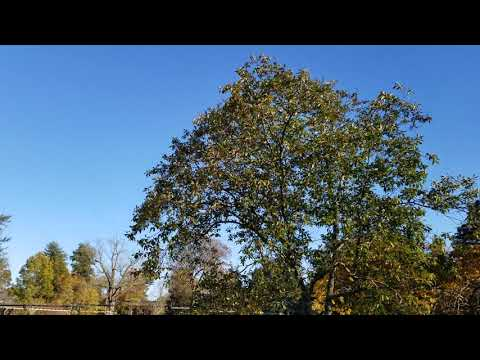 20191101 Colonial Park 1