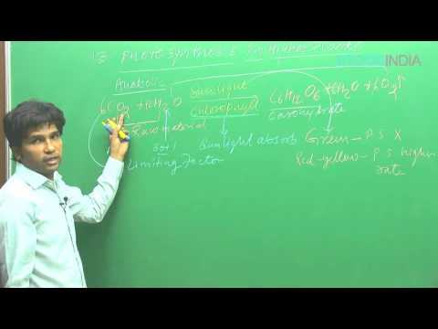 Photosynthesis in Higher Plants by M. Asad Qureshi (MAQ) (ETOOSINDIA.COM) thumbnail