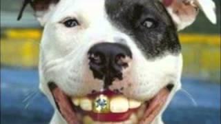 Los Tigrillos - El perro