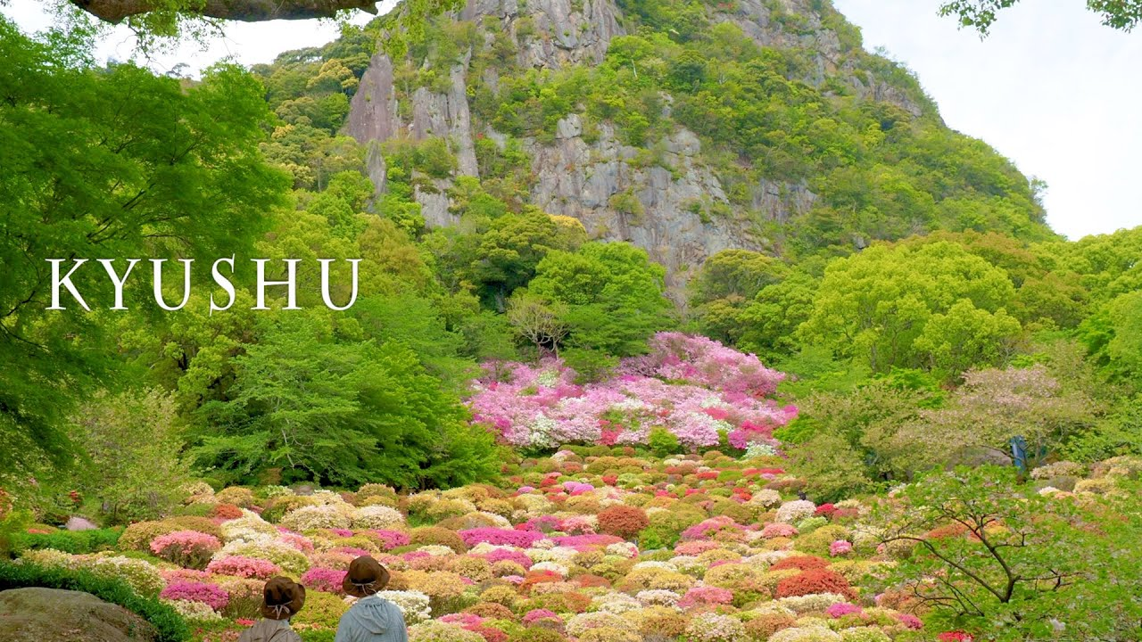 Azalea Plants are Blooming at the foot of a mountain of West Kyushu.#御船山楽園 #長串山公園 #4K